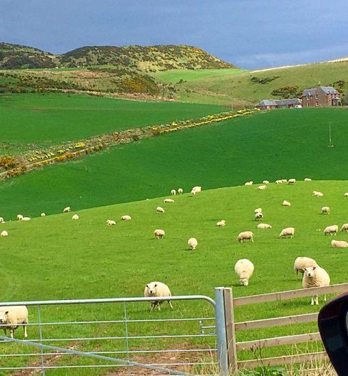 colline scozzesi